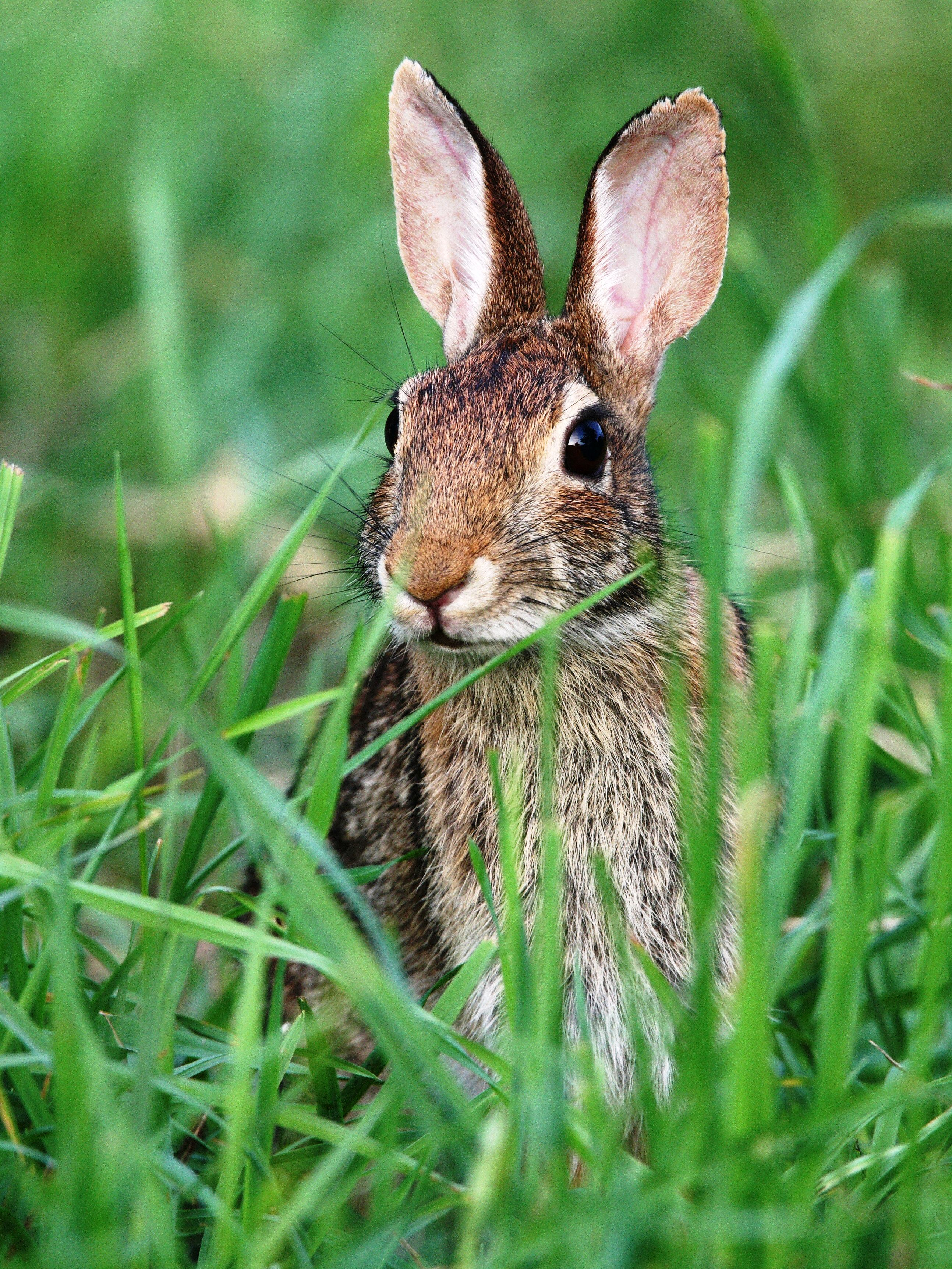 Getting Rid Of Rabbits In Backyard | Homideal